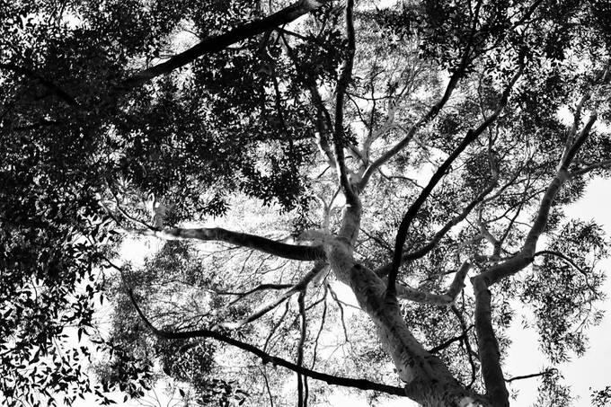 Tree top Canopy