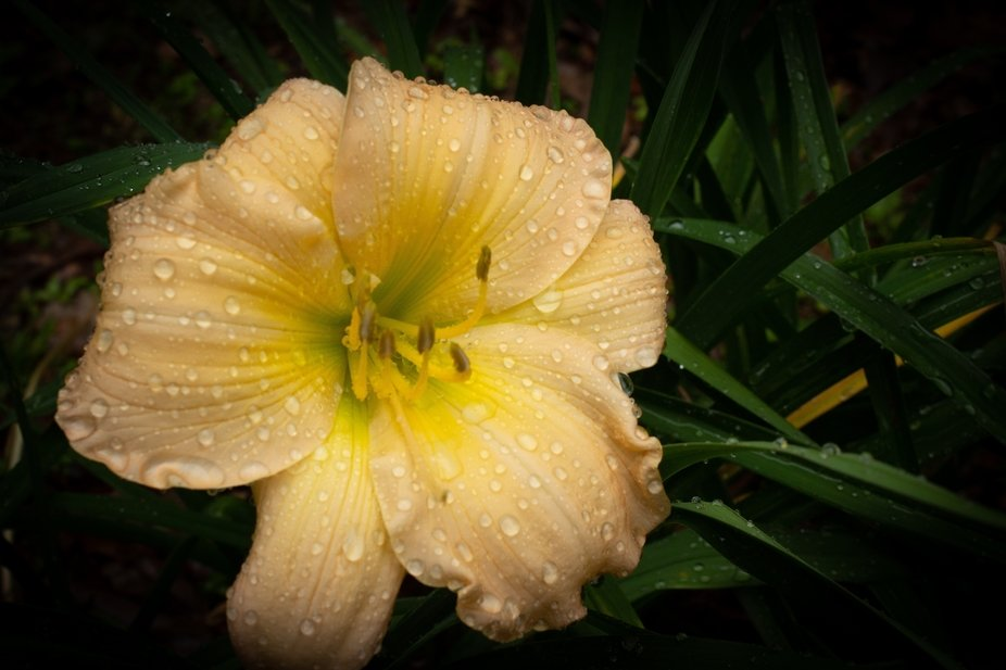 Hard work during winter months working soil yield beautiful flowers.