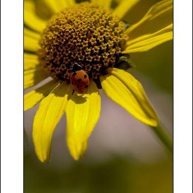 0259 Lady Bug