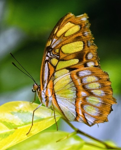 glass wing