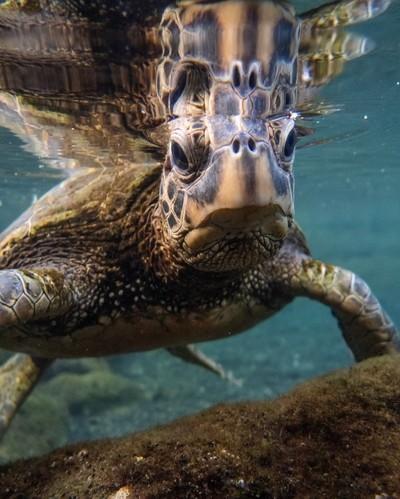 Close sea turtle