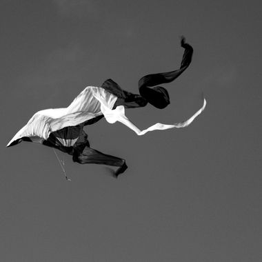 Black and White Kite