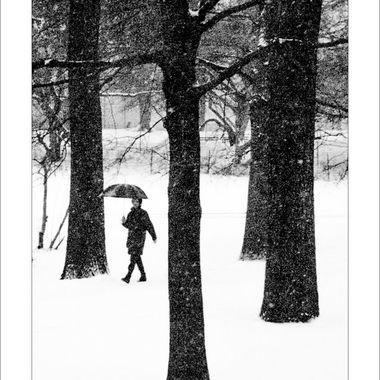 Central Park Walker