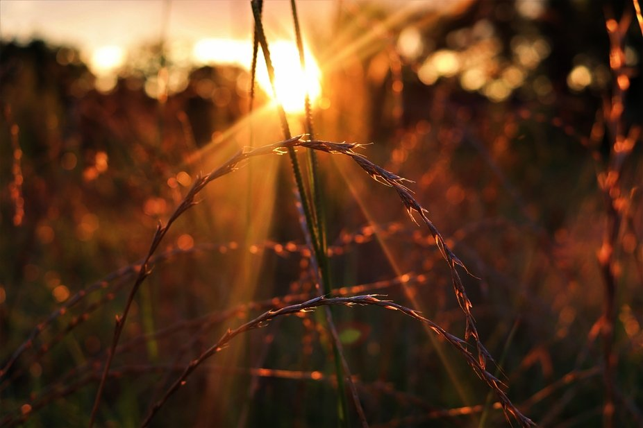 I saw the color of the sun going down reflecting off the blades of grass in a field behind my hou...
