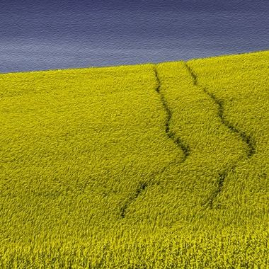 Canola Road