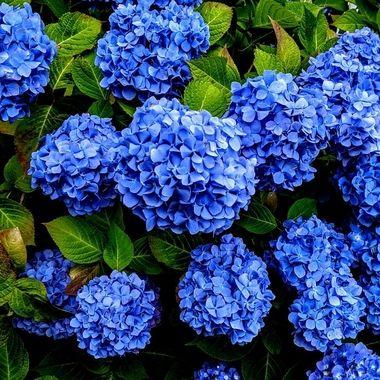 Truly Blue