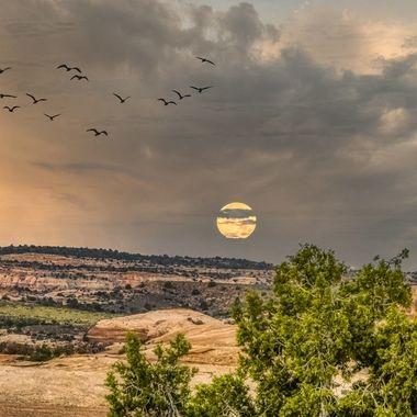 Moon at dawn ...
