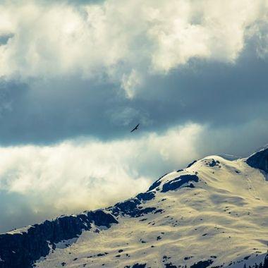 This hawk was enjoying the cross winds