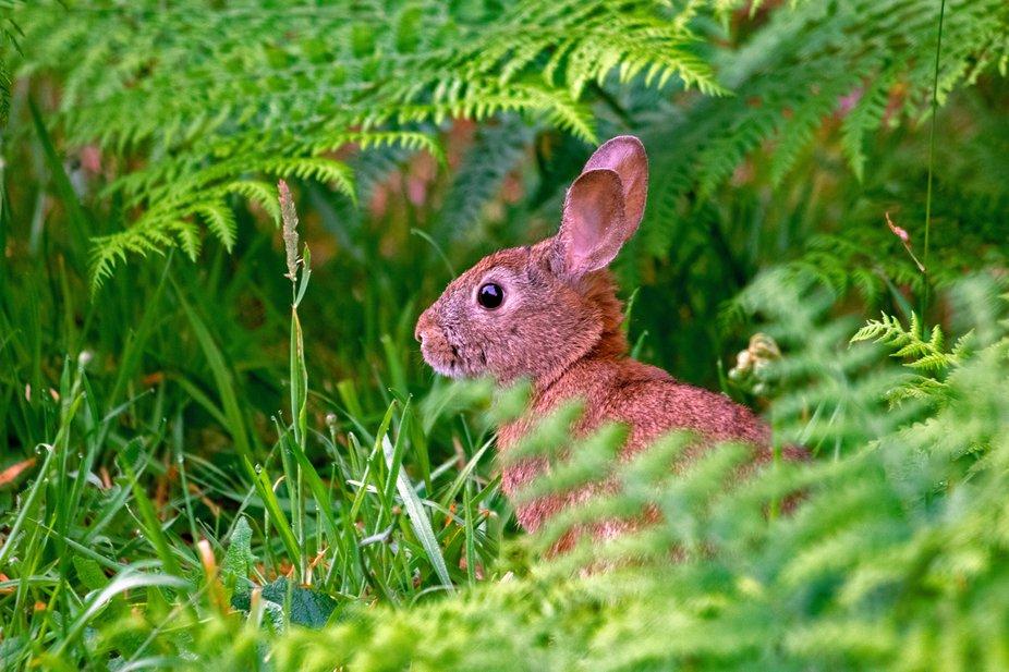 IMG_3311,bunny,edited 7-14-20