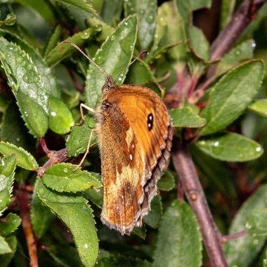butterfly-2547