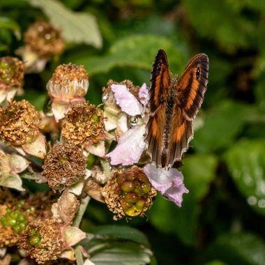 butterfly-2549