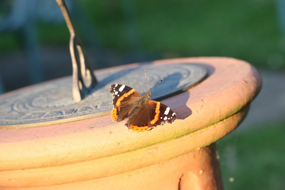 All taken with my second camera in life a Canon 20D with a macro lens. All in Sussex in the UK. b...