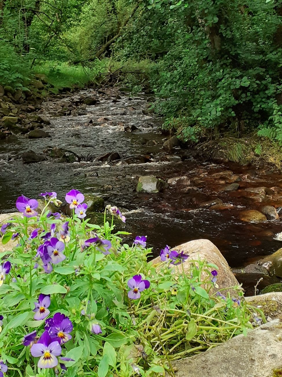 The flower's view of the flowing water.