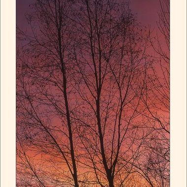 #270 Pink Sunset