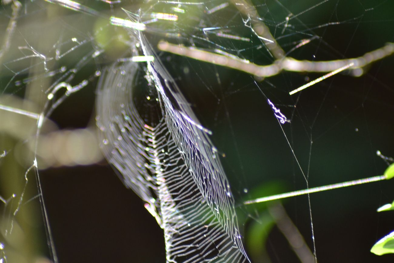 Taken in June of this year from back yard. A series of photos attempting to capture texture of spiderweb by blurring the background as much as possible.