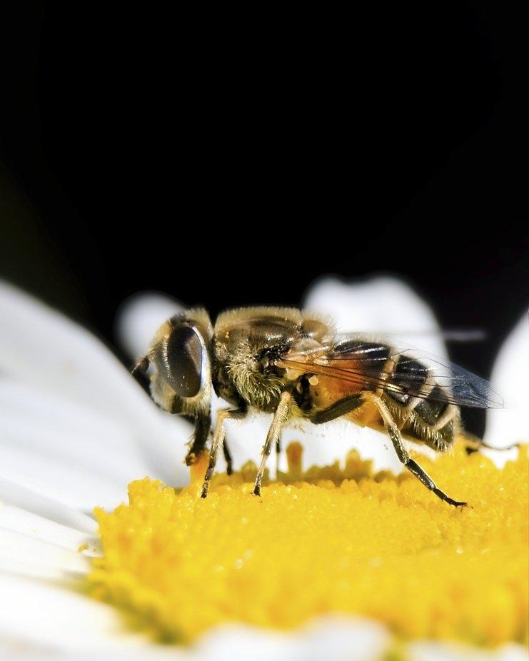 Close-up of a bee hard at work...