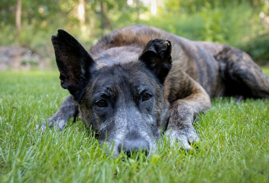 Tucker is what you would call a senior dog, but that doesn't stop him. He is a bit calme...