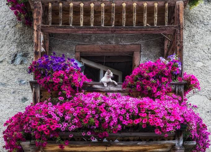 Cat and flowers by Roby55 - My Favorite Colors Photo Contest