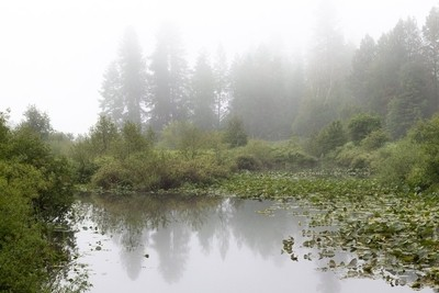 Finally got my foggy morning image by the Creek!