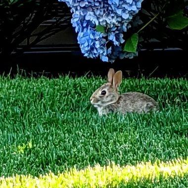 Bunny n Bloom
