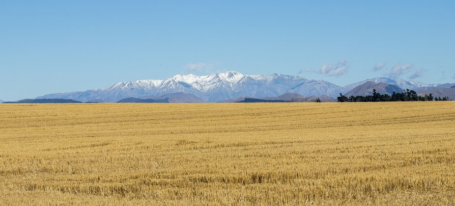 View over a field towards the mountains in the distance. Next to Old West Coast Road between Chri...