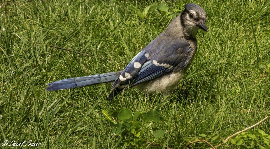 Curious bird deserved having his photo taken.