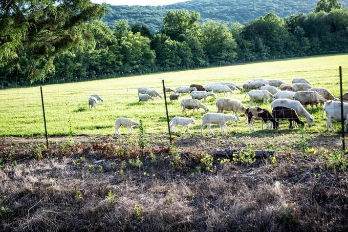 Rural scenes from Madison County, Alabama