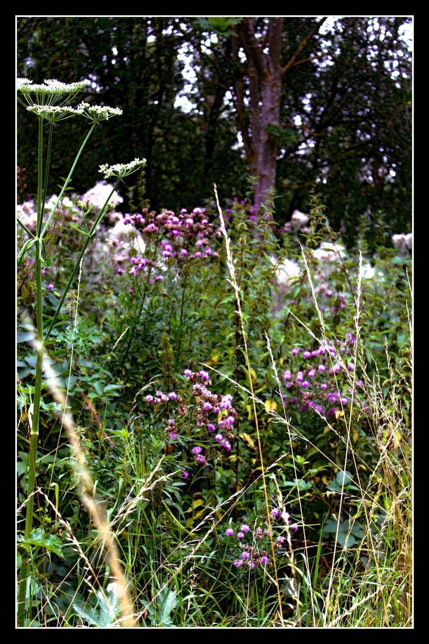 I can not resist. Whenever I see flowers in nature where I like the color combination, I take a picture of it. Theo-Herbots-Photography https://groetenuittienen.blog/
