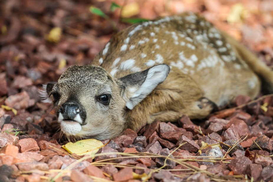 A brand new deer.