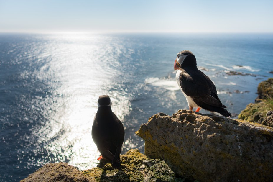 If you are in Iceland, you should not miss watching and photographing puffins. There are some places for it, especially known is Látrabjarg, a really magical place and at the same time the westernmost point of Iceland.