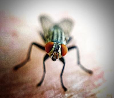 Posing Fly