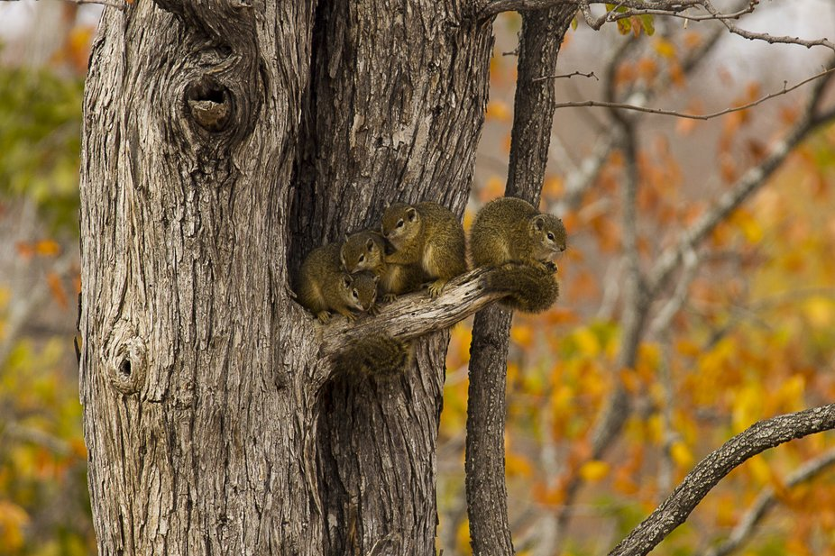 Squirrel family early in the morning