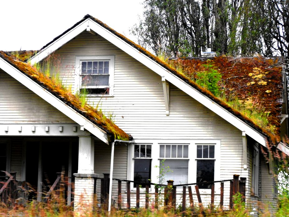 Old House and Mossy Roof