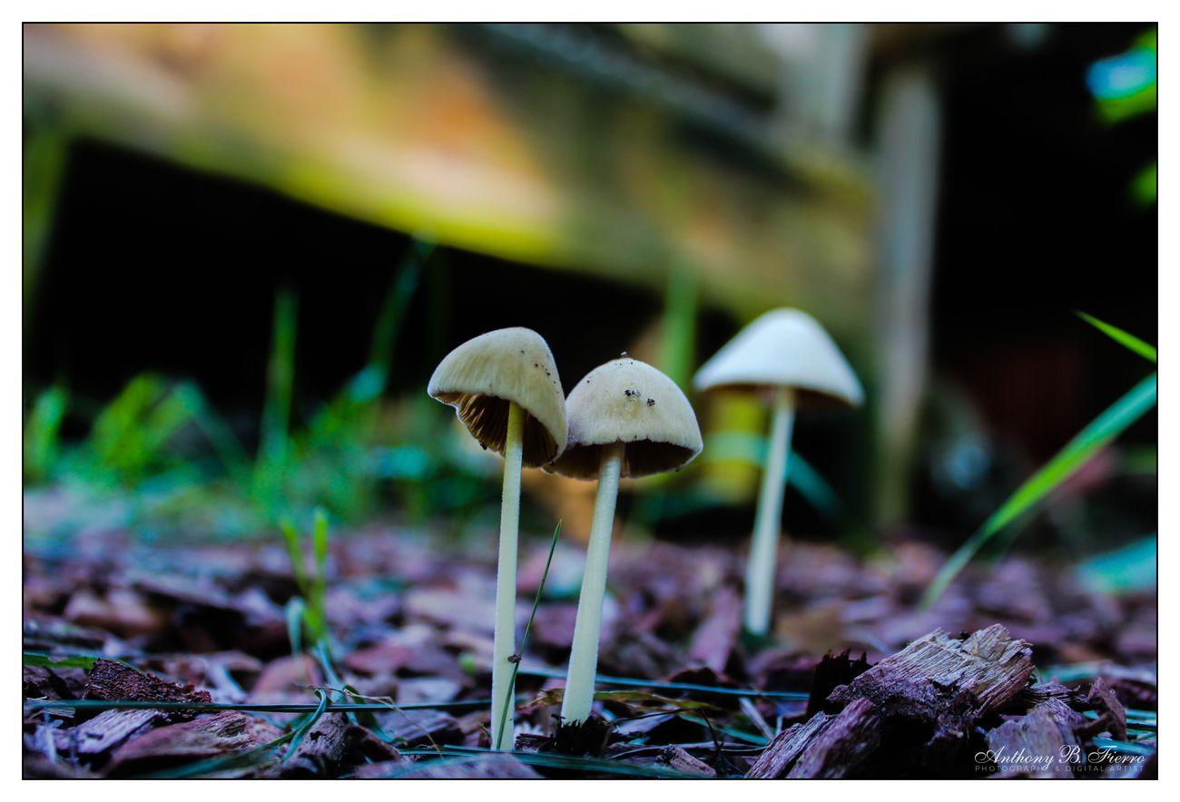Fungi (6)