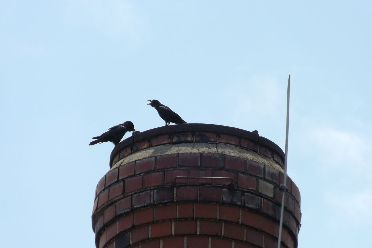 Taken 06/23/2012 on lunch break at work, in parking lot.  A close up of a sealed steam pipe with two cantankerous crows on top.