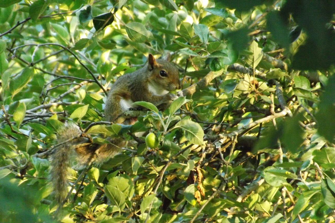 Taken 06/26/2012 from front yard peering into neighboring yard.