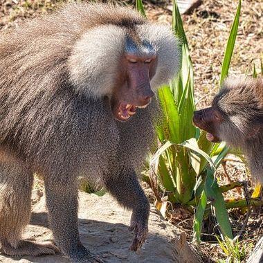 photo taken at Sydney Zoo 24th July 2020
