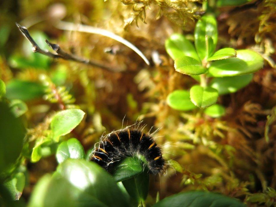 Beautiful caterpillar I saw