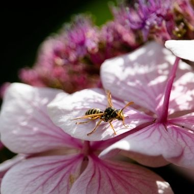 A wasp having a rest, or planning its attack