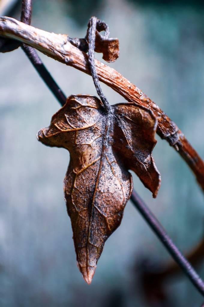 Close up shot of a leaf