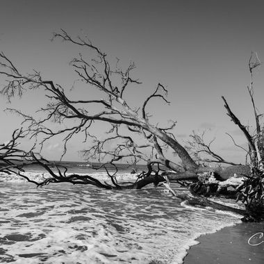Botney Bay in Black & White  aka Boneyard Beach