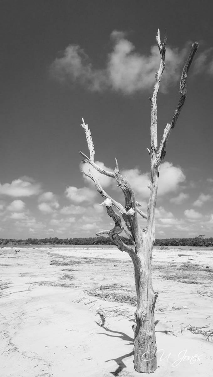 Botney Bay in Black & White  aka Boneyard Beach