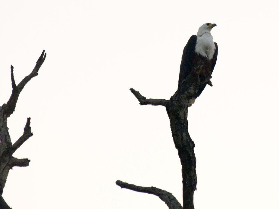Kruger National Park20080820 - 233