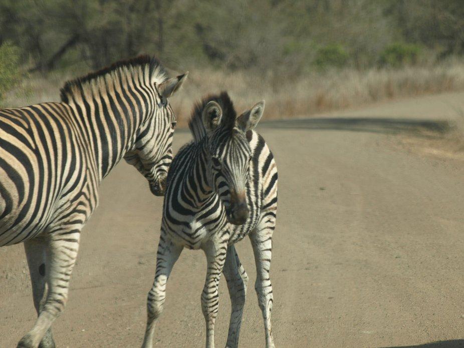 Kruger National Park20080821 - 261
