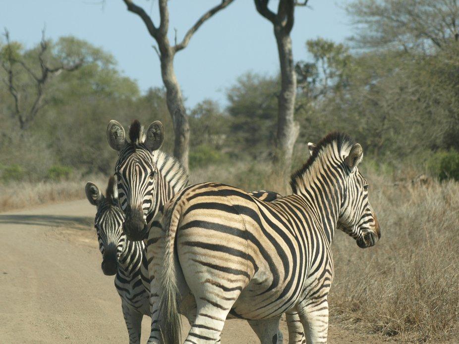 Kruger National Park20080821 - 264