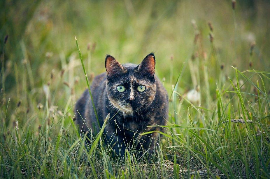 My lovely cat called Praline