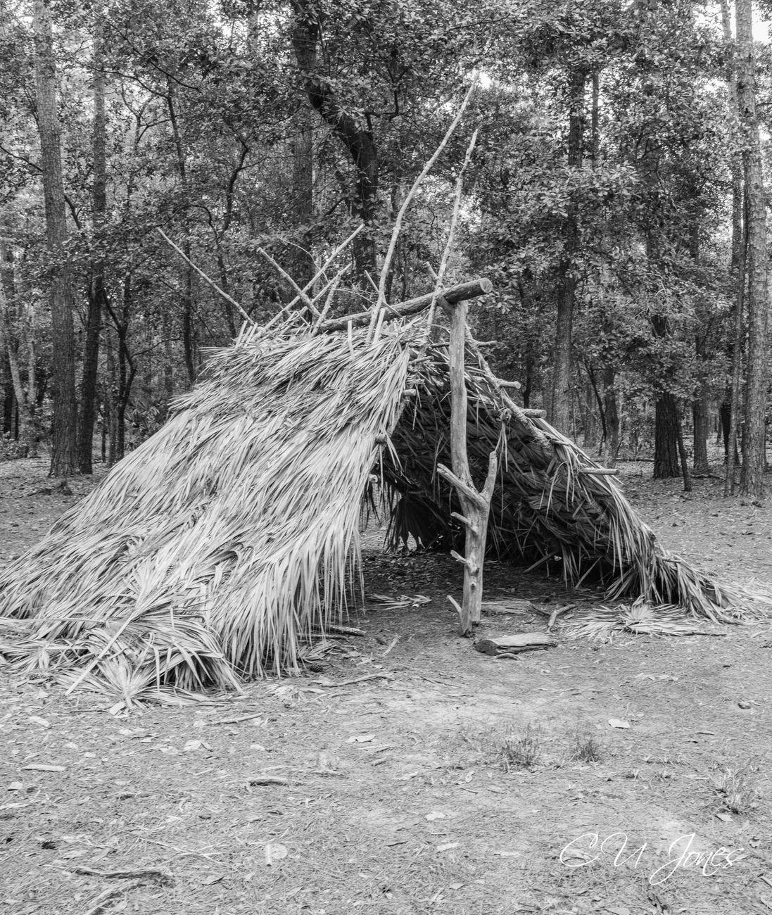 Wormsloe Historic Site in Savannah GA