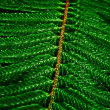 Electric Fern Leaf_2