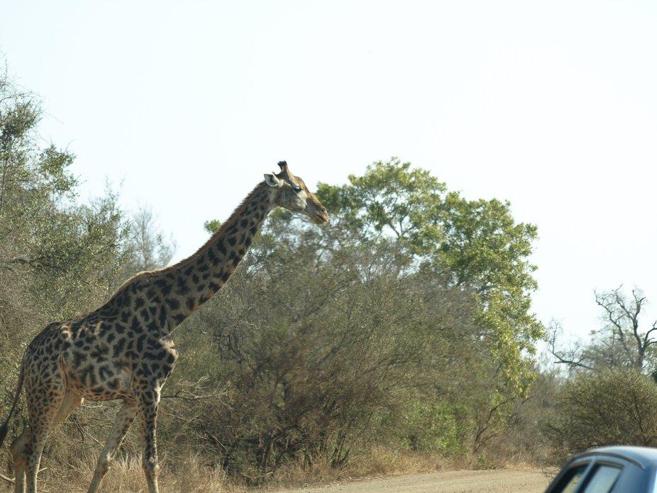 Kruger National Park20080821 - 275