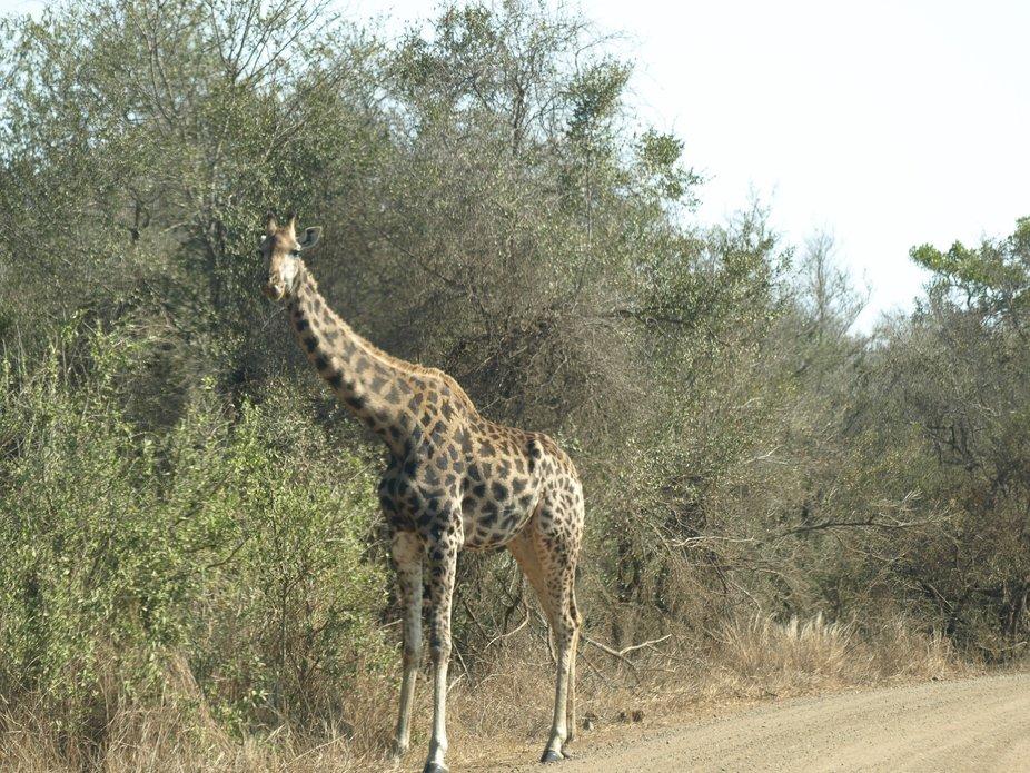 Kruger National Park20080821 - 274
